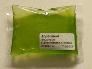 Souche de plancton Nannochloropsis oculata