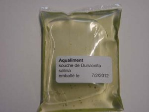 Souche de plancton Dunaliella salina