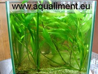 Aquarium d'exposition de tubifex